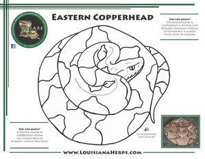 LARE Coloring Page - Copperhead PRINT