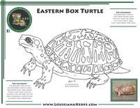 LARE Coloring Page - Eastern Box Turtle
