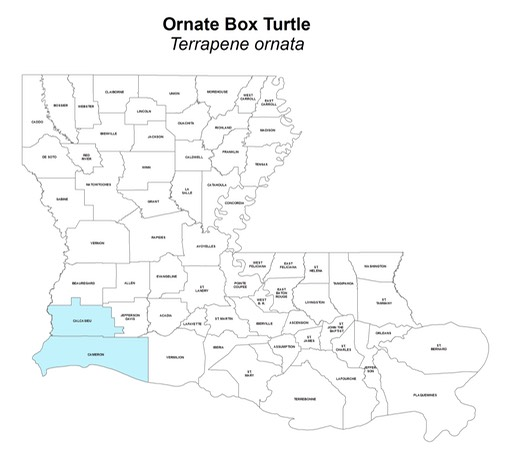 Ornate_Box_Turtle