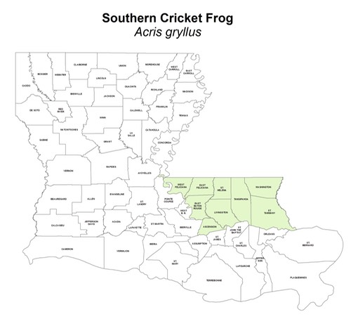 Southern_Cricket_Frog
